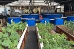 Ouroboros farms 2